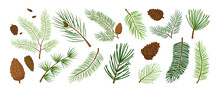 Christmas Pine Branch And Cone, Evergreen Tree, Fir, Cedar Twig Vector Icon, Winter Plants, New Year Wood, Holiday Decoration. Hand Drawn Illustration