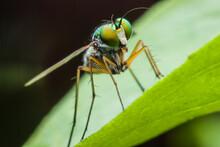 Super Macro Fly