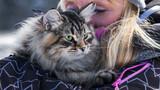 Fototapeta Zwierzęta - Kot i jego pani