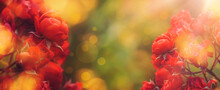 Natural Autumn Summer Floral Red Roses Banner Background With Golden Bokeh Lights, Copy Space