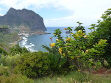 Panorama Fiorito Di Porto Da Cruz A Madeira In Portogallo.
