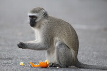 Baboon Sitting On The Ground