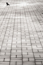 City Sidewalk From Gray Paved Tiles Close-up And Dove