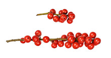 Set Of Winterberry Holly (Ilex Verticillata) Twigs With Red Berries Isolated