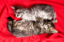 Two Adorable Kittens Lie And Sleep On A Red Blanket Top View.