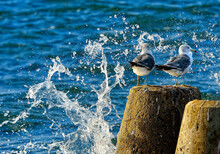 Two Seagulls Are Sitting On The Pier Among The Splashing Water