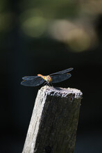 The Dragonfly Rests On A Wooden Pole In The Garden.