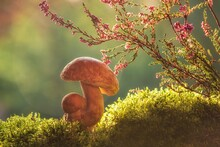 Autumn Still Life With Mushrooms In The Forest