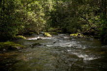 Spring Creek Rushes Into Thick Forest