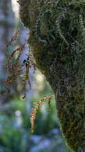 Thick Healthy Green Moss Hanging From Tree
