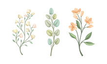 Twig And Foliage With Stem, Leaves And Blooming Flower Vector Set