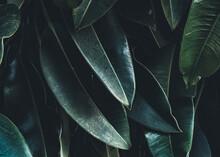 Shadowy Fauna Texture