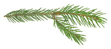 Green Branch Of A Christmas Tree Isolated On A White Background.