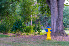 Yellow Fire Hydrant In The Forest