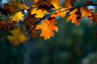 kolorowe liście na drzewach. Jesień