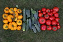 Lithuanian Colours And Autumn Harvest Vegetables. YELLOW RED Tomateos And Cucumbers.  Harvest Flag. Tasty Ecological Food