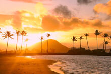 Beautiful View Of A Beach With High Palm Trees And A Sunrise Background In Honolulu, Hawaii