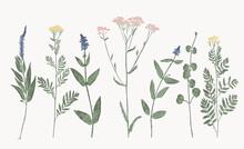 Set Of Hand Printed Wild Flowers
