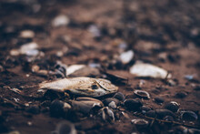 The Dried Fish Died On The Ground. And There Are Also Shells And Pieces Of Twigs.