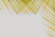 Palmes Tressées