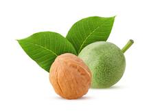 Walnut Whole With Green Leaf