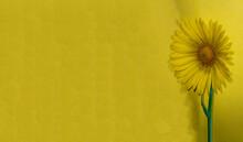 Flower Near The Yellow Wall