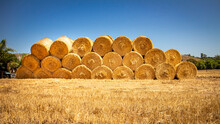Wide Image Of Large Rolled Hay Bales On Yellow Weeds Against A Blue Sky