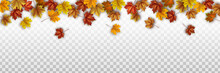 Autumn Leaves On Transparent Background. Seasonal Vector Border With Foliage.