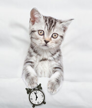 Cozy Tabby Kitten Holds Alarm Clock Under White Blanket On A Bed At Home. Top Down View