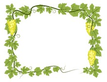 Rectangular Frame. Vine With Foliage And Bunches Of Grapes. Viticulture And Farming. Branches With Berries On A Dense Bush. Young Vineyard. Sweet Autumn Harvest. Isolated On White Background. Vector.