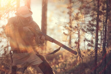 Hunting Man / Hunter With A Gun Hunting In The Autumn Forest, Yellow Trees Landscape In The Taiga