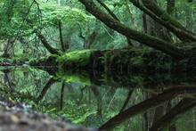 New Forest Landscape Reflection Photo. The Trees And Woodland Clearly Reflected In The Still Calm Water.