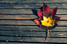 Red Maple Leaves On Trendy Wooden Background With Copy Space. Leaf With Cut Heart Shape On A Bench. Autumn Template In Flat Lay Style With Place For Your Text. Minimal Mockup Concept.