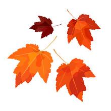 Vector Set Of Autumn Maple Leaves. For Autumn Design, Restaurant Menu, Desserts, Invitation Cards