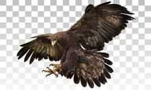Golden Eagle Landing Hand Draw And Paint On Grey White Checkered Background Vector