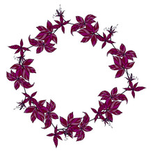 A Wreath Of Burgundy Maiden Grape Twigs. Autumn Colors.