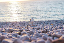 The Curious Seagull