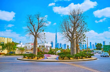 Australian Boab Trees In Dubai, UAE