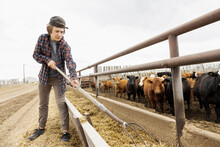 Teenage Boy With Pitchfork Working On Cattle Ranch