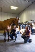 Female Veterinarians Examining Horse In Equine Rehab Barn