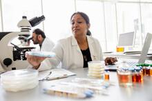Female Scientist With Petri Dish In Laboratory