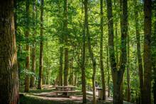 Paisaje De Bosque Verde Oscuro.Hermoso Bosque Con Suelo Cubierto De Musgo Y Rayos De Sol A Través De Los árboles