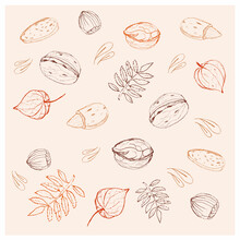 Set Of Different Nuts, Leaves And Physalis