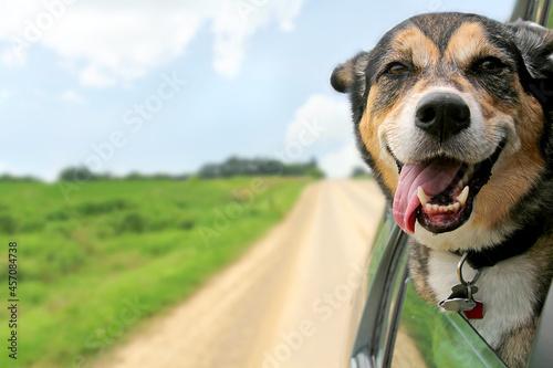 Obraz na plátně German Shepherd Dog Sticking Head Out Driving Car Window