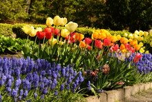 Beautiful Spring Flowers Blooming In The Botanical Garden