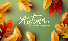 Autumn Thanksgiving  Background Design With Falling Autumn Leaves And Room For Text. Vector Illustration