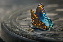 A Red-spotted Purple Butterfly On The Lazy Susan Of A Patio Table