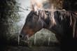 paard portret Pferdeporträt