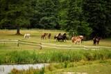 Fototapeta Zwierzęta - konie na łące w Tykocinie, zagroda, Podlaskie,