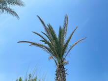 Palm Trees Against Blue Sky.Palm Trees At Tropical Coast.vintage Tone